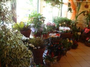A virágküldés váci üzletünk óriási választékából biztosítjuk helyi megrendelés esetén