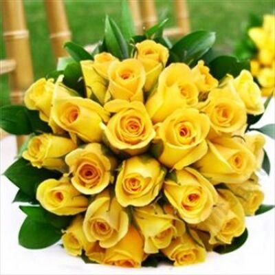 25 szál rövid sárga rózsa