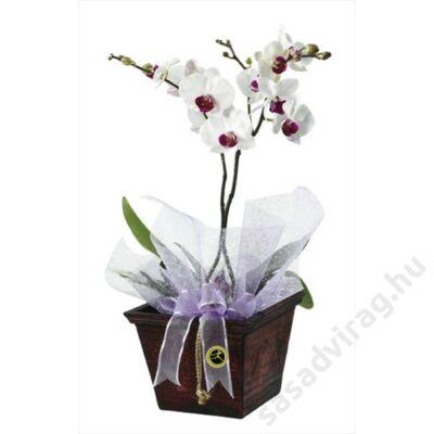 Virágzó Orchideák