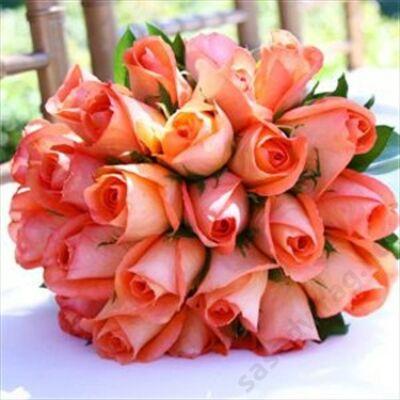 25 szál rövid narancs rózsa