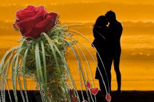 Virágküldés hűségtesztre